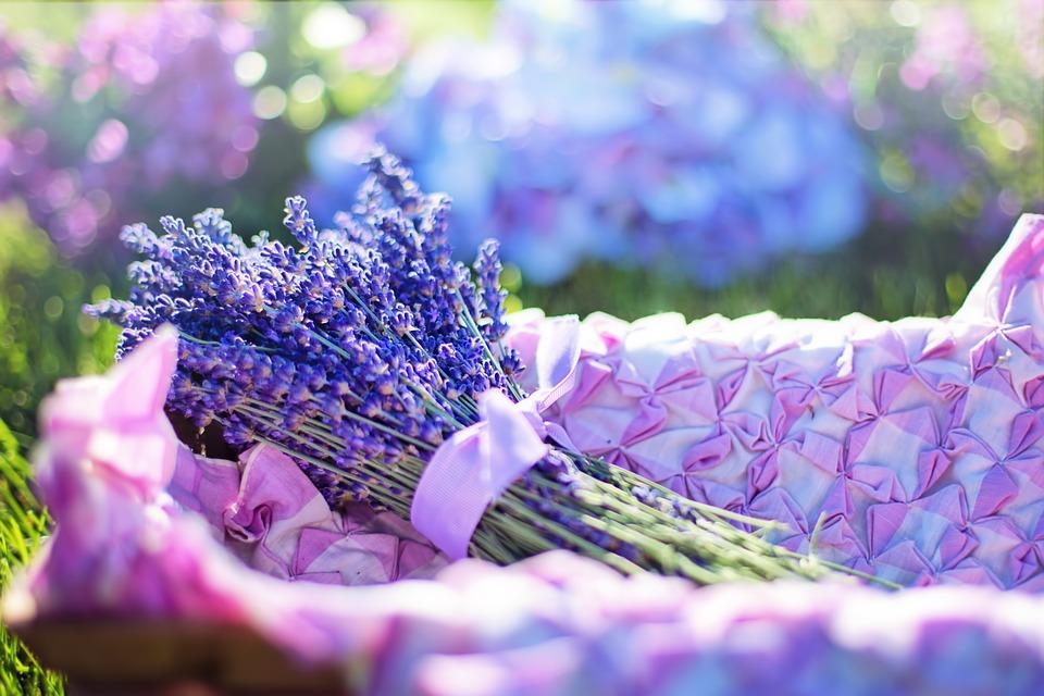 lavender-2482372_960_720